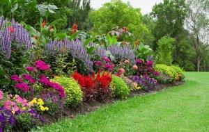 organic-flower-garden-budget-main_1000