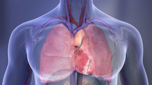 Heart+and+lungs+illustration_mid.jpg